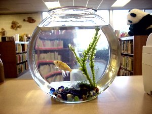 Dewey in his fishbowl